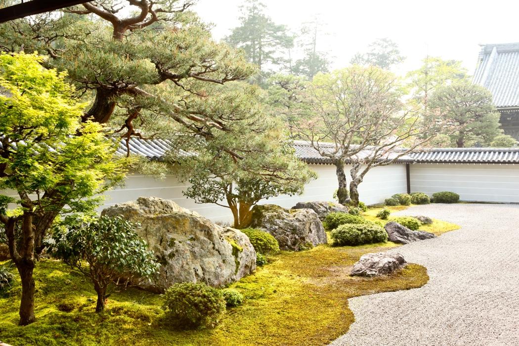 Plantes japonaises d'extérieur
