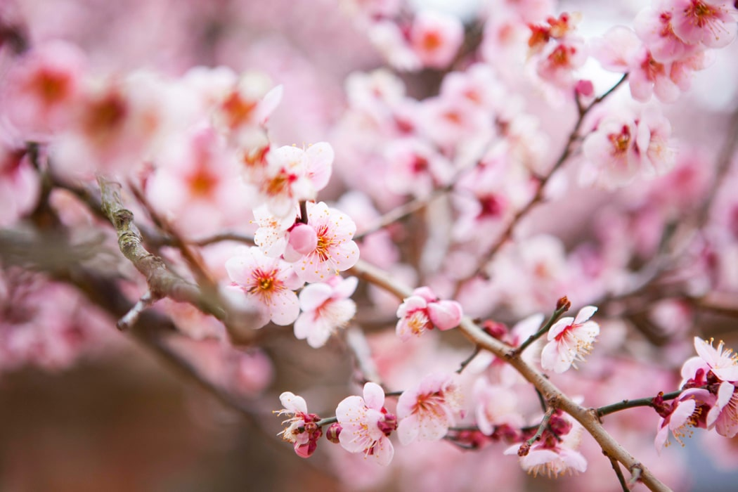 plantes japonaises exterieures